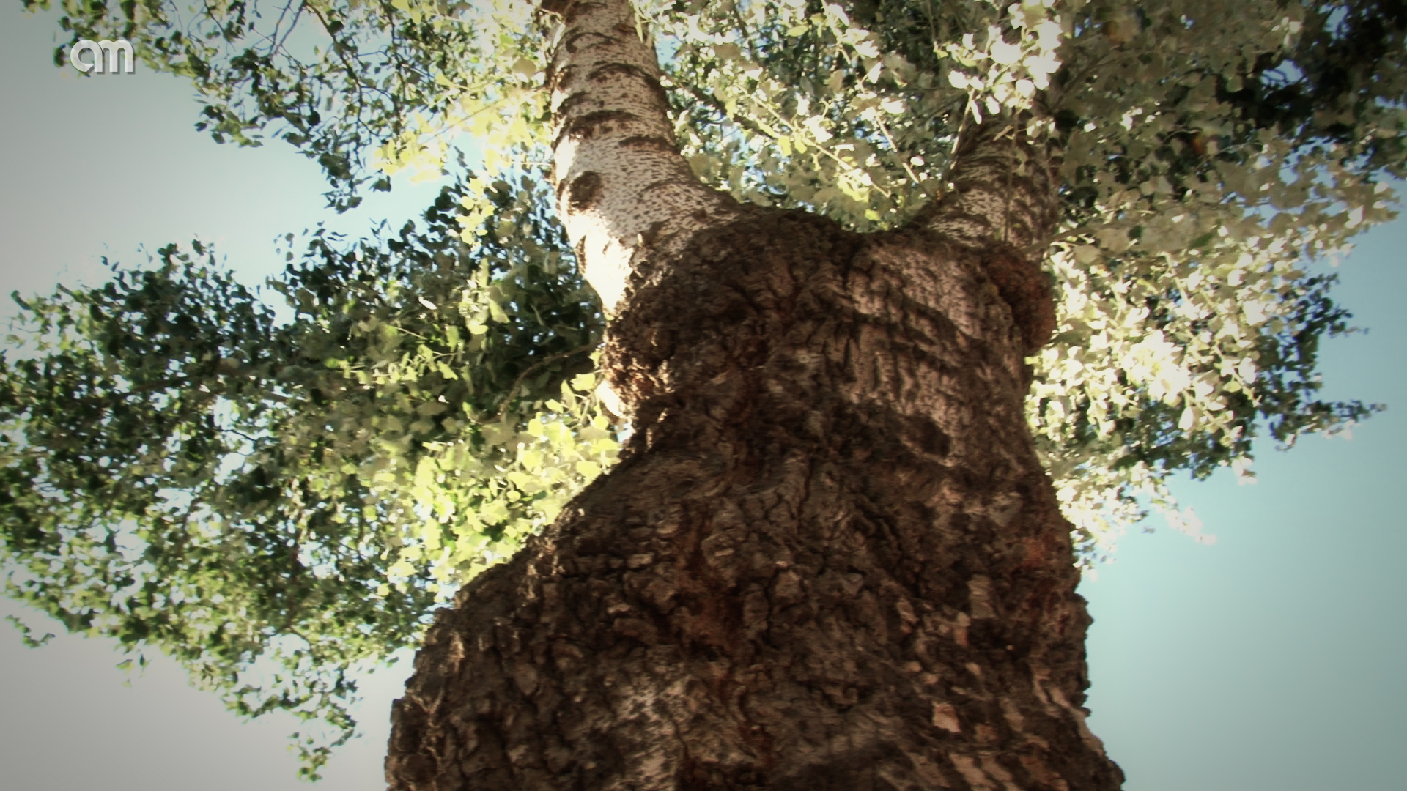 Ruta de los árboles singulares, un paseo por lo desconocido a través de la historia