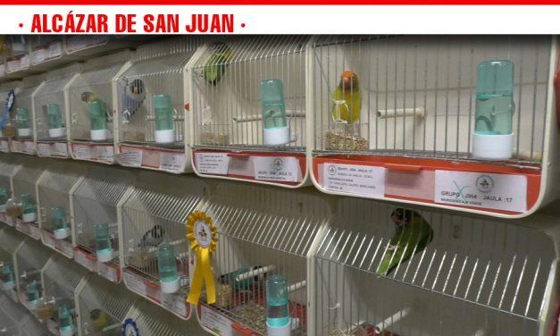 El XXXIV Concurso-Exposición de Canaricultura y Ornitología de Alcázar de San Juan reúne a más de 1.400 pájaros de toda España
