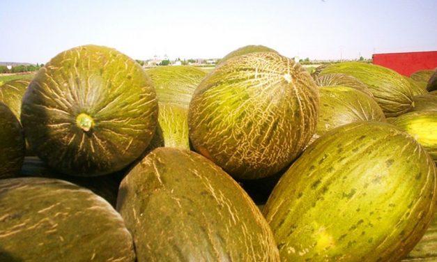 """Membrilla acoge la IV Jornada Técnica del melón y la sandía bajo el lema """"Por el futuro del sector"""""""