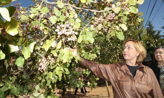 El pistacho de Castilla La Mancha estará presente por primera vez en la pirámide de la Dieta Mediterránea