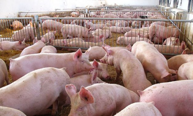 La Junta Vecinal de Cinco Casas presenta alegaciones en contra de la instalación de una marcrogranja porcina en las inmediaciones del municipio