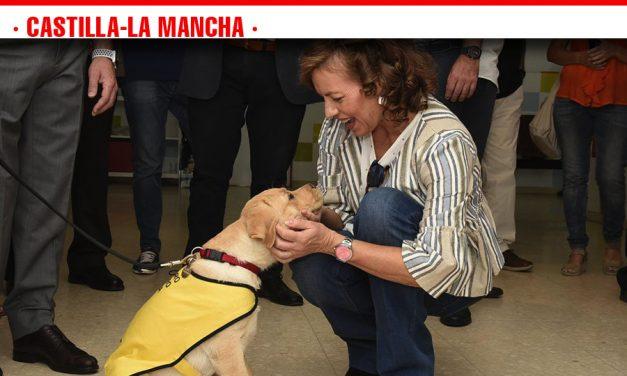 Se espera unanimidad en la aprobación de la nueva ley que ampliará el acceso al entorno de perros de asistencia