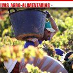 Cooperativas Agro-alimentarias Castilla-La Mancha estima un aumento del 25% de la producción en esta vendimia