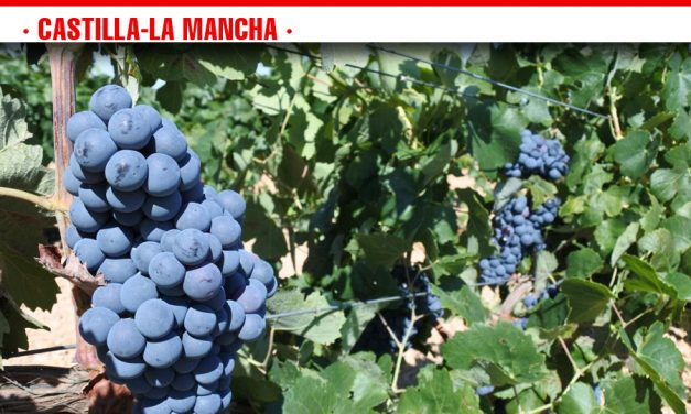 Abonados esta semana 4,5 millones de euros a los viticultores por pagos de reestructuración de viñedo