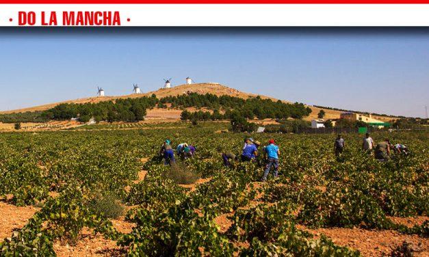 Tramo final de la vendimia en DO La Mancha, marcada por una buena calidad y un incremento de cosecha