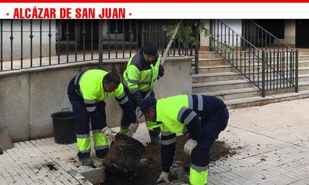 La concejalía de Parques y Jardines está llevando a caboreposición de árboles en nuestra ciudad