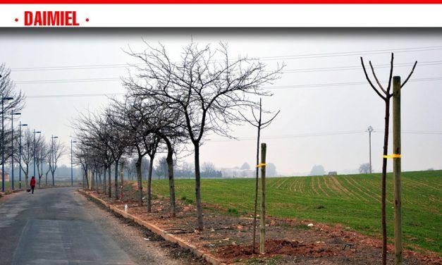 Parques y Jardines cerrará la legislatura con cerca de 700 árboles plantados