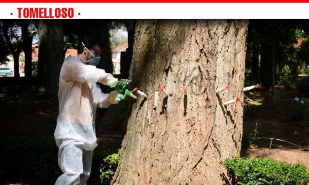 Medio Ambiente aplica un nuevo tratamiento de endoterapia para la eliminación de plagas en zonas verdes
