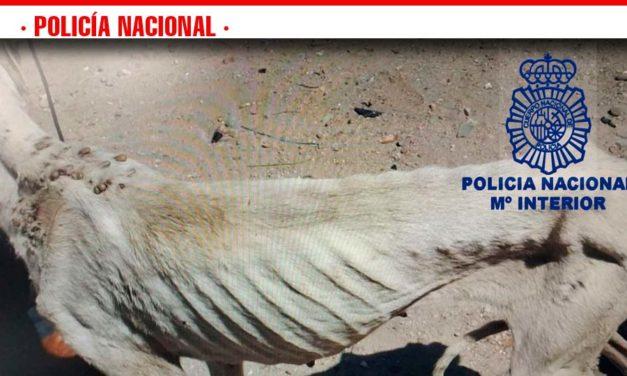 La Policía Nacional ha detenido a una persona que dejó a sus tres perros en un estado de lamentable inanición
