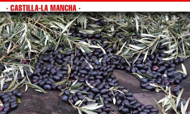Cooperativas Agro-alimentarias Castilla-La Mancha estima una reducción de cosecha de aceituna de un 55% en la región