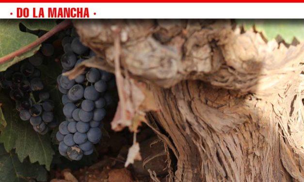 Los viñedos DO La Mancha a las puertas de una vendimia más corta y de excelente calidad