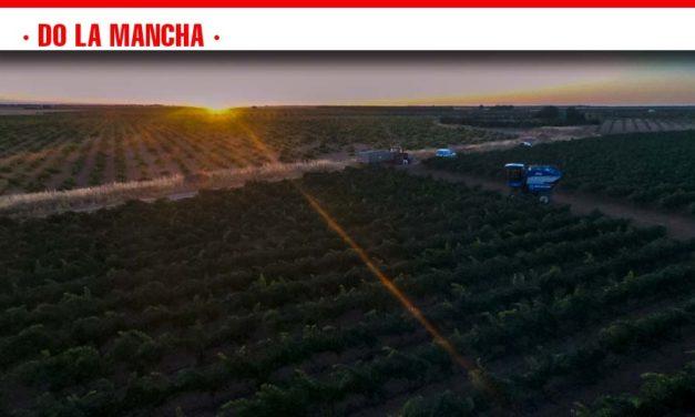 Arranca la vendimia en DO La Mancha con la variedad chardonnay