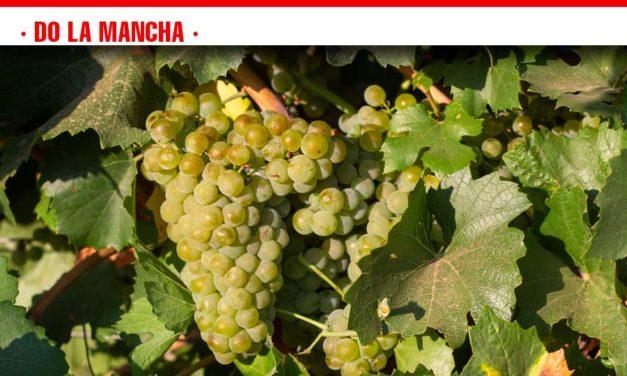 Se generaliza la recogida de la variedad Tempranillo en la Denominación de Origen La Mancha
