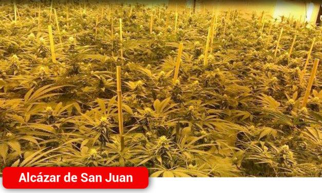 La Policía Nacional detiene a un matrimonio que explotaba un cultivo ilegal de marihuana