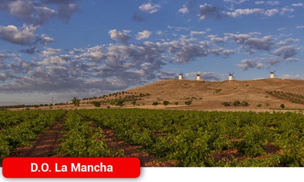 El viñedo en La Mancha, factor clave de sostenibilidad en la conservación del territorio y el Medio Ambiente