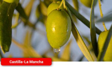 La producción de aceite en Castilla-La Mancha se reducirá en más de un 60% según las cooperativas