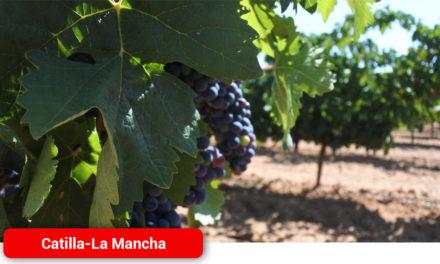 Se amplía hasta el 31 de julio, el plazo de solicitudes de certificación de la reestructuración del viñedo