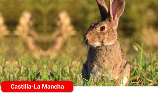 La crisis de costes lleva a la ruina a los ganaderos de conejo