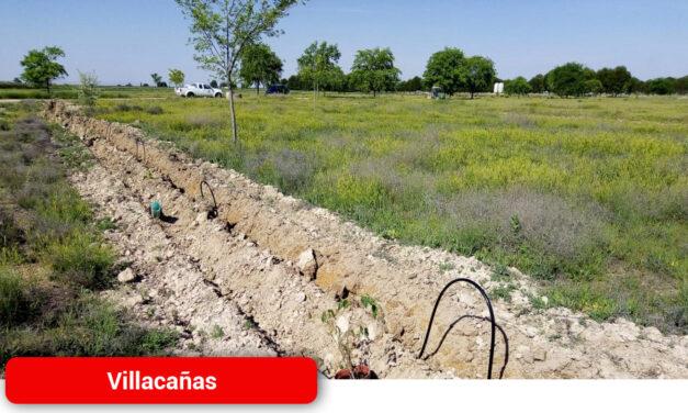 Plantación de nuevos árboles en la zona de San Gregorio