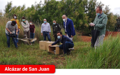 El Complejo Lagunar acoge la suelta de los únicos siete ejemplares de Cerceta pardilla que hay en toda la región