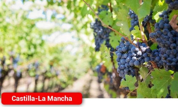 Tierra de Viñedos y la Interprofesional del Vino se alían en el fomento de la cultura del vino con un proyecto que se inicia mañana con catas en el medio rural