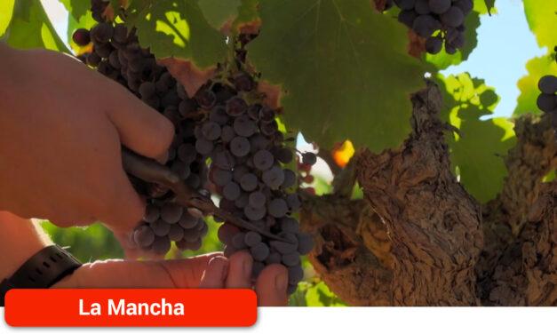 Cooperativas Agro-alimentarias prevé una cosecha de 25,5 millones de hectolitros de vino y mosto
