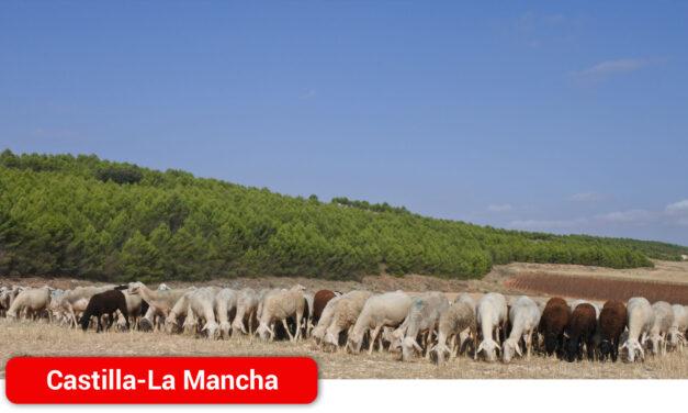 Más de 400 ganaderos de ovino y caprino de la provincia de Ciudad Real han recibido esta semana 2 millones de ayudas para el pastoreo