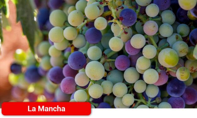El envero marca la cuenta atrás para la vendimia en DO La Mancha