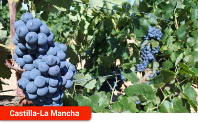El DOCM publica la orden con recomendaciones y obligaciones para garantizar que la vendimia en Castilla-La Mancha se desarrolle con normalidad