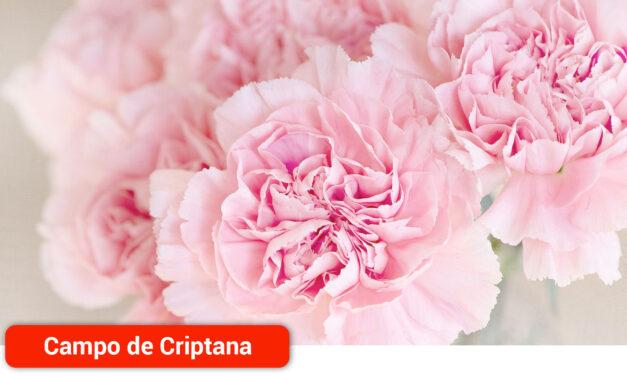 La localidad prohibe la venta ambulante de plantas y flores el Día de Todos los Santos