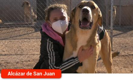 Conoce el proceso de adopción y la importancia del voluntariado en la protectora de animales Animalcázar