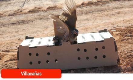 Una suelta de 2.000 perdices pone el broche final al proyecto europeo 'LIFE Estepas de La Mancha'