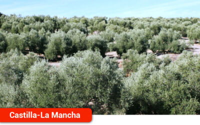 El Día del Olivo reivindica el peso del olivar tradicional en la región