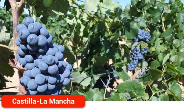 El Gobierno regional abona más de 2,1 millones de euros en ayudas a 211 viticultores de la provincia de Ciudad Real