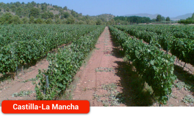 Riesgo de que la Campaña del Campo a la Mesa acabe con la viticultura en Castilla-La Mancha