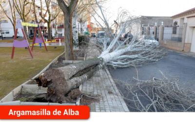 Un  árbol de grandes dimensiones ha sido derribado en el Parque de las Acacias por las fuertes rachas de viento