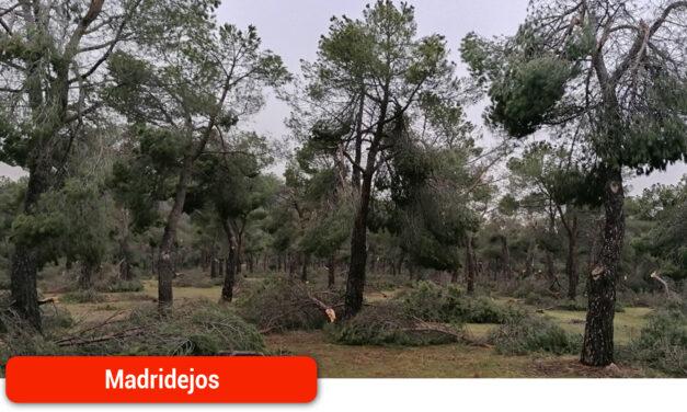 """Recogida de leña muerta en el suelo de la """"Sierra de Madridejos"""""""