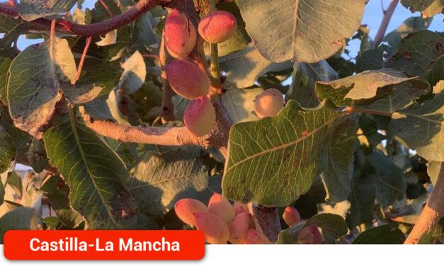 La región representa ya el 81 por ciento de la superficie de pistacho en toda España con cerca de 38.000 hectáreas alcanzadas en 2020