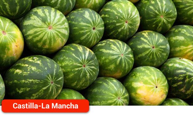 Arranca la Campaña de recolección del melón y la sandía con un ligero descenso de la plantación de melón