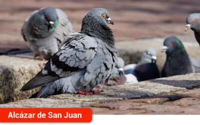 Captura controlada y batidas de la Sociedad de Cazadores para erradicar la plaga de palomas