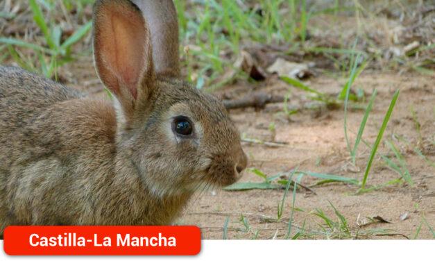 El Gobierno regional publica la ampliación de la declaración de emergencia cinegética temporal por daños de conejo de monte