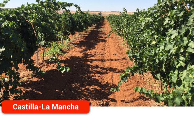 No podemos permitir que más viticultores se vayan del sector
