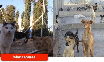 El servicio de núcleos zoológicos continúa su labor contra el abandono animal
