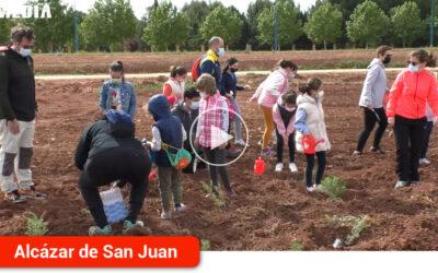 Las familias de la ciudad participan en la primera actividad de voluntariado ambiental con la plantación de 600 aromáticas