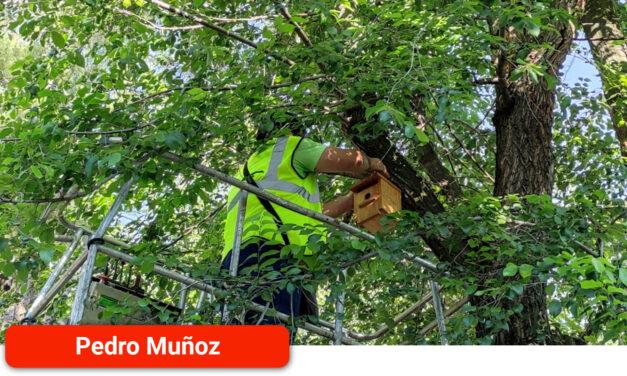 El Ayuntamiento instala 30 cajas nido en los parques para fomentar la biodiversidad