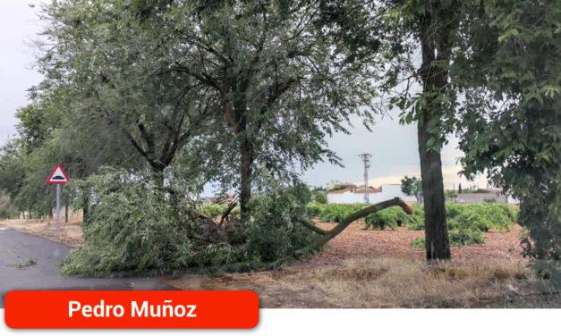 Las tormentas provocan daños en parques y arboladas