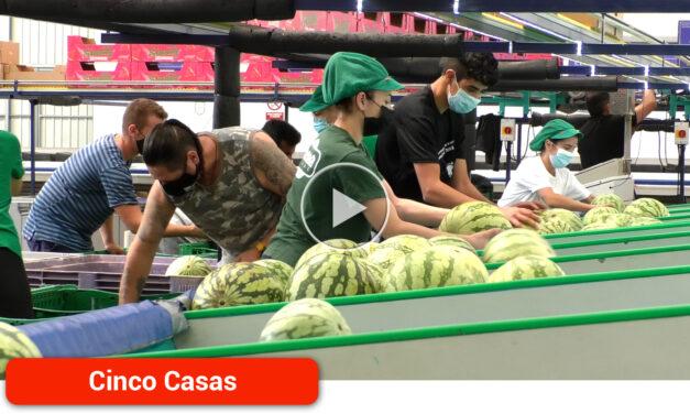 El melón piel de sapo y las sandías negras y rayadas siguen siendo las variedades más demandadas por el mercado nacional