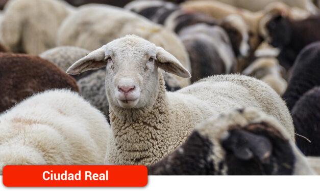 ASAJA Ciudad Real consigue que se vayan a dar ayudas a los ganaderos para reponer animales en su explotación