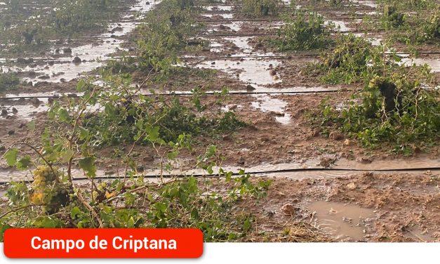 ASAJA solicita la rebaja del IBI rústico para los viticultores afectados por el temporal