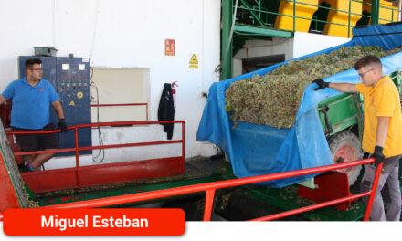 La campaña de vendimia en Miguel Esteban dejará menor producción, buena calidad y precios más altos